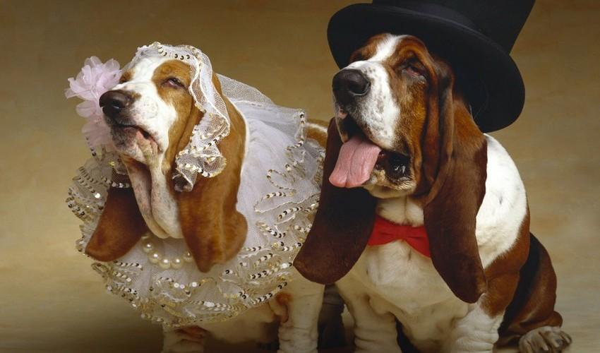 Свадебные церемонии для домашних питомцев